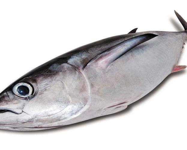 Tonno Alalunga a 14,90 €/kg